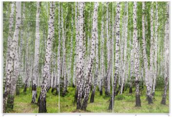 Panel szklany do szafy przesuwnej - Image with birch forest.