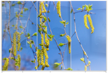 Panel szklany do szafy przesuwnej - Birch branches with young leaves and catkins against of sky