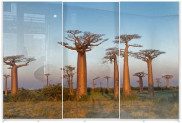 Panel szklany do szafy przesuwnej - Field of Baobabs