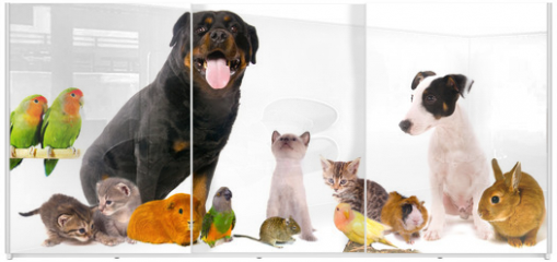 Panel szklany do szafy przesuwnej - montage animaux