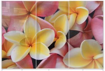 Panel szklany do szafy przesuwnej - Blume