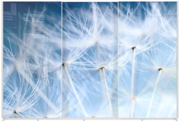 Panel szklany do szafy przesuwnej - The Dandelion background. Macro photo of dandelion seeds.