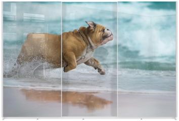 Panel szklany do szafy przesuwnej - Happy dog Bulldog running at the sea