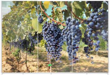 Panel szklany do szafy przesuwnej - tuscany wine grapes