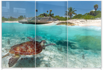 Panel szklany do szafy przesuwnej - Caribbean Sea scenery with green turtle in Mexico