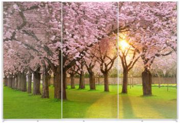 Panel szklany do szafy przesuwnej - Faszinierende Frühlingsszene bei Abendsonne