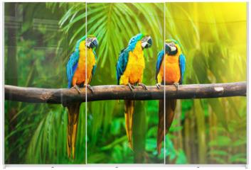 Panel szklany do szafy przesuwnej - Blue-and-Yellow Macaw