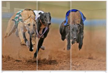 Panel szklany do szafy przesuwnej - sprinting greyhounds