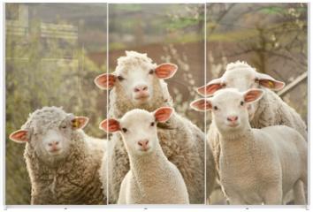 Panel szklany do szafy przesuwnej - Sheep on pasture