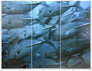 Panel szklany do szafy przesuwnej - School of tuna