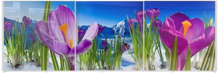 Panel szklany do szafy przesuwnej - Springtime in mountains - crocus flowers in snow