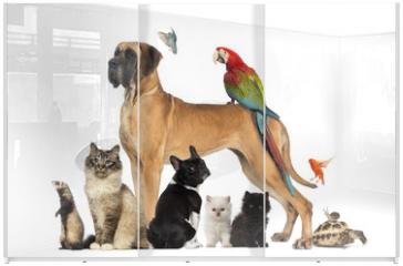 Panel szklany do szafy przesuwnej - Group of pets - Dog, cat, bird, reptile, rabbit,...