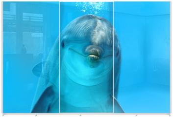 Panel szklany do szafy przesuwnej - Dolphin Look