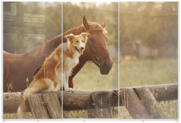 Panel szklany do szafy przesuwnej - Red border collie dog and horse