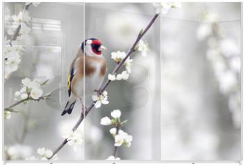 Panel szklany do szafy przesuwnej - Goldfinch, Carduelis carduelis