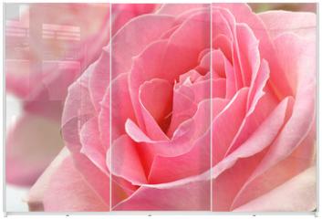 Panel szklany do szafy przesuwnej - Kwiat róży