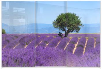 Panel szklany do szafy przesuwnej - Lavender field. The plateau of Valensole in Provence