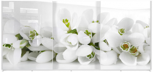 Panel szklany do szafy przesuwnej - Beautiful snowdrops, isolated on white