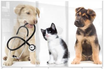 Panel szklany do szafy przesuwnej - puppy looks
