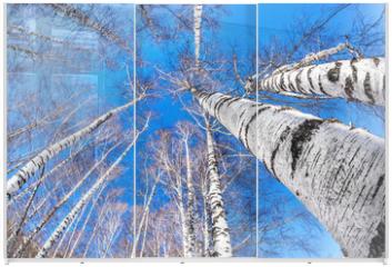 Panel szklany do szafy przesuwnej - Birchwood