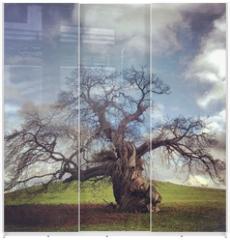 Panel szklany do szafy przesuwnej - skeletal tree without leaves in autumn