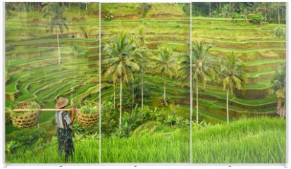 Panel szklany do szafy przesuwnej - Bali, rizière en terrasse