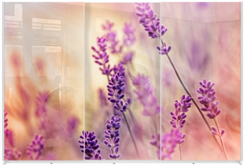 Panel szklany do szafy przesuwnej - Soft focus on beautiful lavender and sun rays - sunbeams