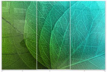 Panel szklany do szafy przesuwnej - Macro leaves background