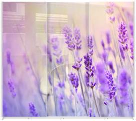 Panel szklany do szafy przesuwnej - Lavender lit by sun rays