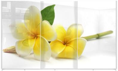 Panel szklany do szafy przesuwnej - Tropcal Frangipani