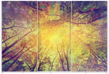 Panel szklany do szafy przesuwnej - Autumn, fall trees. Sun shining through colorful leaves. Vintage