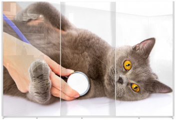 Panel szklany do szafy przesuwnej - doctor and a British cat on white background