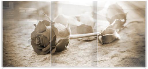 Panel szklany do szafy przesuwnej - Rose in the ligt