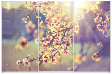 Panel szklany do szafy przesuwnej - Beautiful nature scene with blooming tree and sun flare