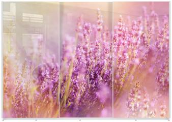 Panel szklany do szafy przesuwnej - Lavender flowers lit by sun rays (sunbeams)