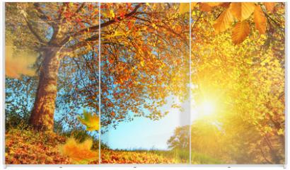 Panel szklany do szafy przesuwnej - Golden autumn scenery with lots of sunshine