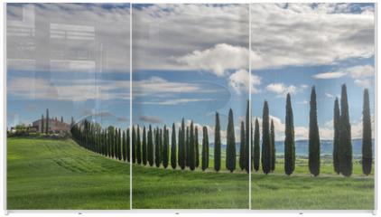 Panel szklany do szafy przesuwnej - Avenue of cypresses
