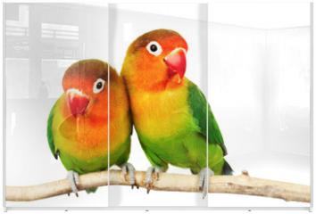 Panel szklany do szafy przesuwnej - Pair of lovebirds agapornis-fischeri isolated on white