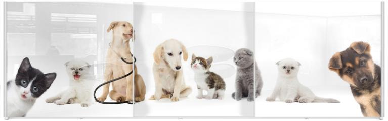 Panel szklany do szafy przesuwnej - kitten and puppy looking