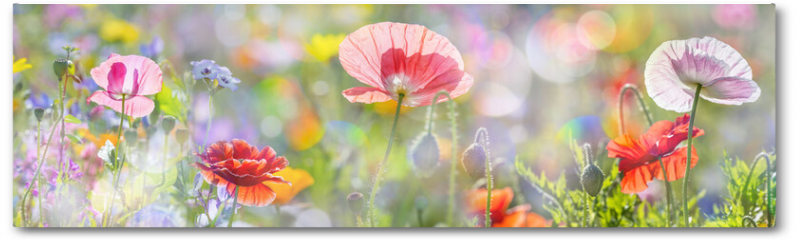 Plakat - summer meadow with red poppies