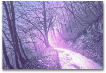 Plakat - Magical foggy purple, serenity pantone color light in mystic forest with road.