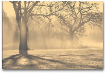 Plakat - Bäume