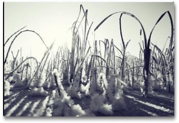 Plakat - winter landscape in the background field