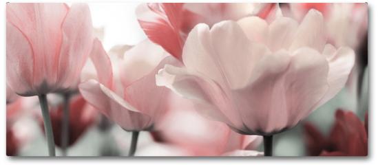 Plakat - pink tinted tulips