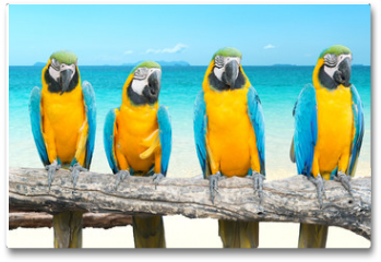 Plakat - Blue and Gold Macaw on tropical beautiful beach and sea