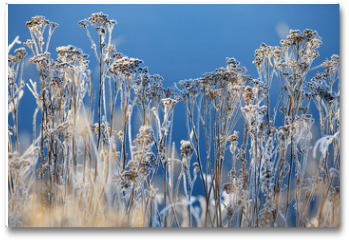 Plakat - winter background landscape of grass with rime