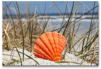 Plakat - Sea shell