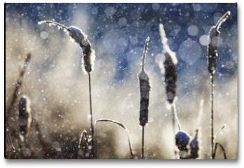 Plakat - texture of the snow