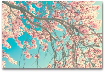 Plakat - Spring blossom