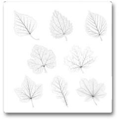 Plakat - Set of vector isolated monochrome single leaves